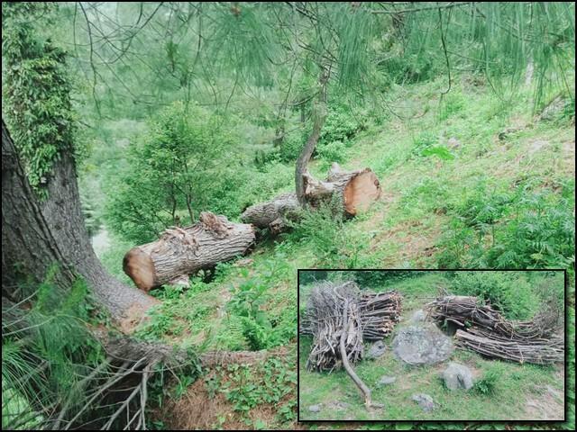 کشمیر کے خوبصورت جنگلات کی تباہی کا ذمے دار کون ہے؟ (تصاویر: بلاگر)