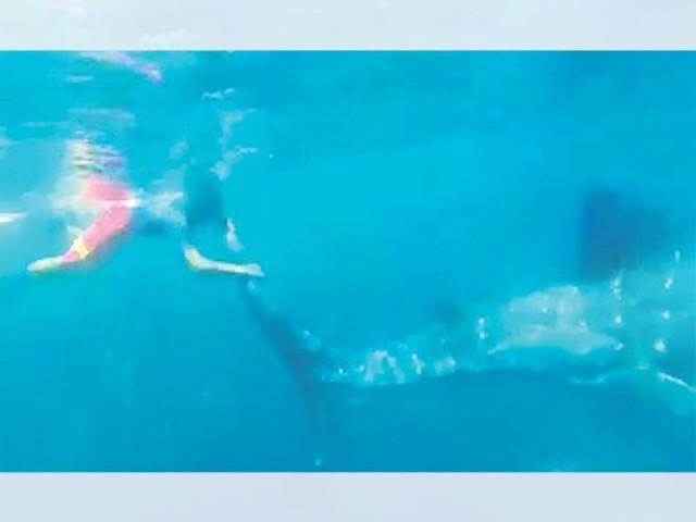 مبارک ولیج کے قریب وہیل،ڈولفن، کچھوؤں کی کئی اقسام پائی جاتی ہیں، وہیل پاکستانی سمندروں میں 170بار دکھائی دی،معظم علی۔ فوٹو: فائل