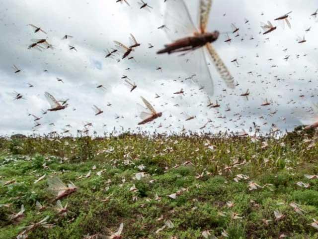 Plan to make standard fertilizer from locust heart and bio-waste  Photo: File
