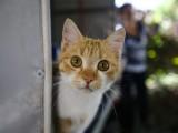 بلی کے مسلسل ایک سمت میں دیکھنے اور بے چین ہونے سے اس کا مالک متوجہ ہوگیا۔ فوٹو، انٹر نیٹ