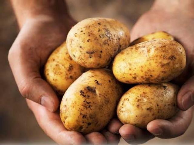 آلو کی مجموعی ملکی پیداوار کا 95 فیصد حصہ پنجاب سے حاصل ہوتا ہے فوٹو: فائل