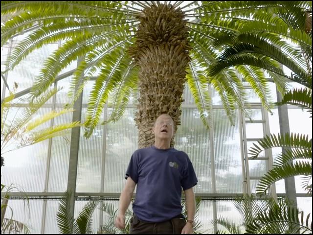 یہ ''نر درخت'' ہے جسے اپنی نسل بڑھانے کےلیے ''اصل مادہ'' کی اشد ضرورت ہے۔ (فوٹو: یوٹیوب اسکرین گریب)