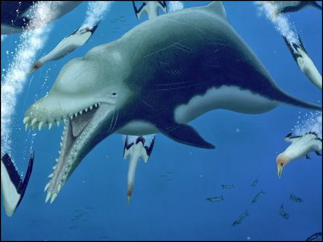 یہ ڈولفن 15.7 فٹ لمبی تھی اور ڈھائی کروڑ سال پہلے سمندروں اور دریاؤں پر حکمرانی کرتی تھی۔ (تصاویر بحوالہ: کرنٹ بائیالوجی)