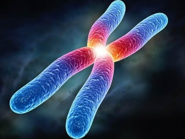 امریکی ماہرین نے انسانی ایکس کروموسوم کا مکمل ڈرافٹ تیار کرلیا ہے۔ فوٹو: فائل