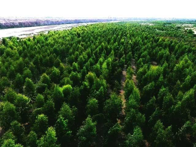 وزارت موسمیاتی تبدیلی نے 2 کروڑ 50 لاکھ روپے کی رقم سرنڈر کردی،: فوٹو : فائل