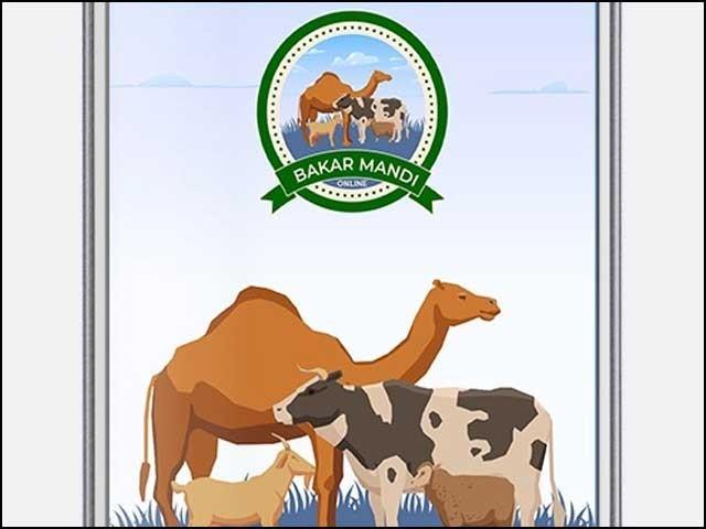 بکرا منڈی موبائل ایپ کے ذریعے جانور فروخت کرنے کی سہولت بھی دی گئی ہے فوٹوایکسپریس