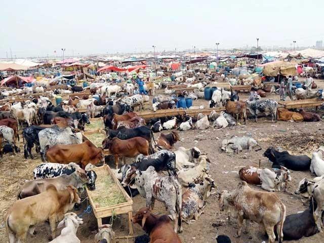 ملک میں مجموعی طورپر73 لاکھ مویشیوں کی قربانی ہوئی جبکہ گزشتہ سال یہ تعداد 80 لاکھ تھی۔