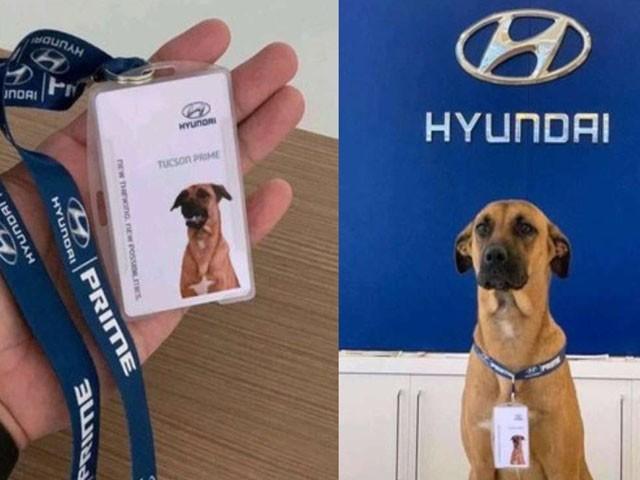 کتے نے اپنی بہترین کارکردگی سے گاہکوں کے دل جیت لیے، فوٹو : انسٹاگرام