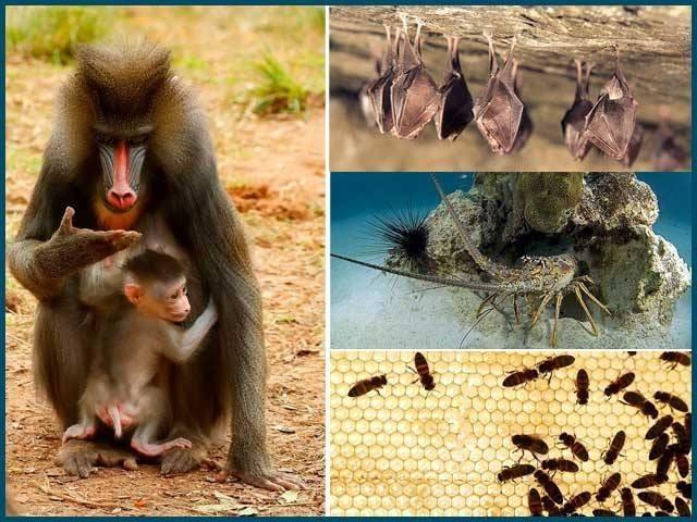 فطرت میں کئی جانور بیمار ہونے پر دوسرے سے فاصلہ اختیار کرلیتے ہیں۔ فوٹو: فائل