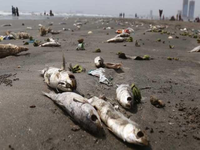مچھلیاں مقامی زبان میں بوئی کہلاتی ہیں جو سمندری تغیر اور آکسیجن کی کمی سے ساحل پر آتی ہیں،  معظم خان  ۔ فوٹو : سوشل میڈیا