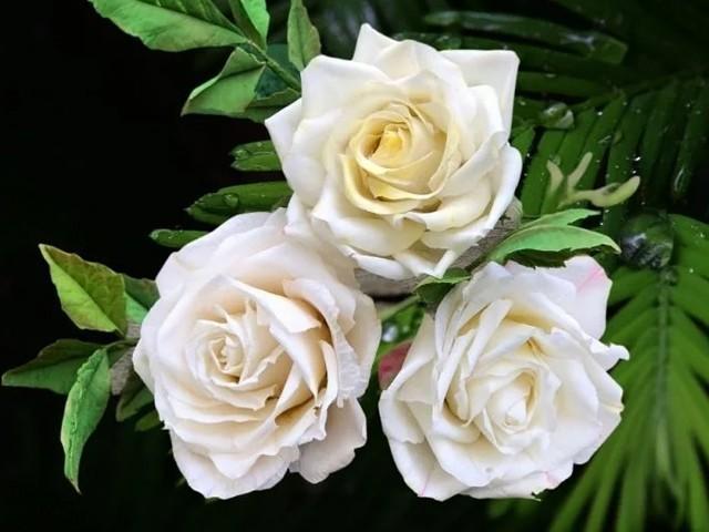 دیکھنے میں یہ بالکل اصلی لگتے ہیں مگر یہ پھول شکر سے بنائے گئے ہیں۔ (تصاویر: لوسیانا گونزالیز)