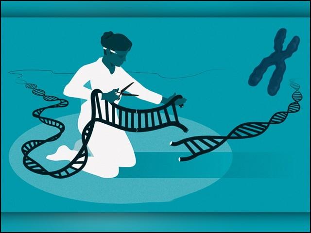 کرسپر سی اے ایس نائن کو جینیاتی انجینئرنگ اور جین ایڈیٹنگ کی جدید ترین تکنیک قرار دیا جارہا ہے۔ (فوٹو: نوبل پرائز ڈاٹ آرگ)