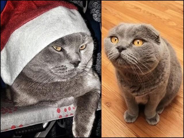 اس بلی کے سامنے جس خواہش کا بھی اظہار کیا جائے، وہ ضرور پوری ہوتی ہے۔ (فوٹو: انٹرنیٹ)