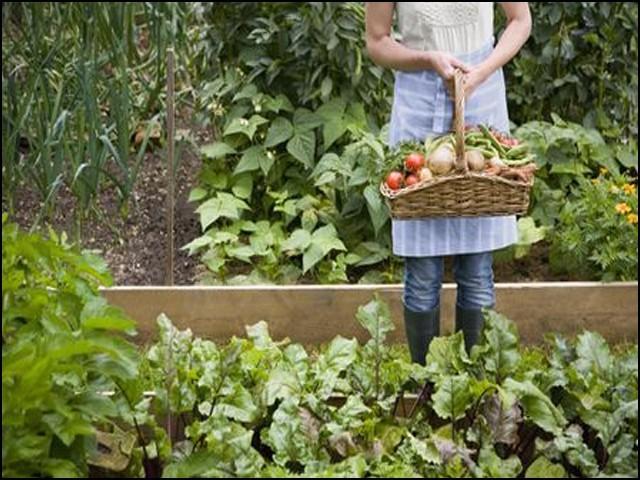 گھریلو باغیچہ مہنگائی اور غذائی کمی کے مسئلے کا بہترین حل ہے۔ (فوٹو: انٹرنیٹ)