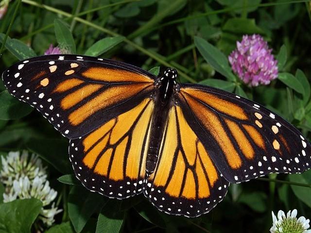 حشرات کی معدومی کی بڑی وجہ فصلوں پر آنے والے زہریلے اسپرے ہیں ، ماہرین فوٹو: فائل