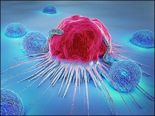 یہ دوا سرطان زدہ خلیوں کو اس قابل ہی نہیں چھوڑتی کہ وہ غذا کو ہضم کرکے توانائی پیدا کرسکیں اور زندہ رہ سکیں۔ (فوٹو: انٹرنیٹ)