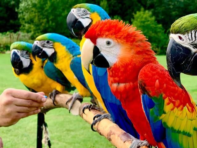 غیرملکی جانوروں اور پرندوں کی درآمد پر 31 دسمبر 2020 تک پابندی عائد تھی فوٹو: فائل