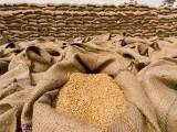 پنجاب حکومت ہمیں ان کے صوبے سے گندم خریدنے نہیں دیتی، خیبر پختونخوا حکومت کا شکوہ فوٹو: فائل