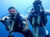 دلہا دلہن نے سمندر کی 60 فٹ گہرائی میں ایک دوسرے کو ہار پہنائے، فوٹو : ویڈیو گریب