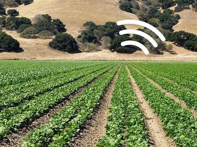 ایم آئی ٹی کے ماہرین نے پودوں کو مختلف سینسرز سے جوڑ کر انہیں ماحولیاتی اور موسمیاتی ڈیٹا ای میل کرنے کے قابل بنادیا ہے۔ فوٹو: ایم آئی ٹی