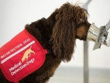 تربیت یافتہ کتوں کو ایئرپورٹس پر تعینات کیا گیا ہے، فوٹو: ٹوئٹر
