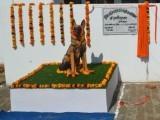 جرمن شیفرڈ کتا تربیت کے بعد 2014 میں پولیس ڈاگ اسکواڈ میں شامل ہوا تھا، فوٹو : بھارتی میڈیا