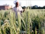 حکومت ہرایسے اقدام کا خیرمقدم کرے گی جوصوبے اورملک میں زراعت کی بہتری کے لیے سود مندثابت ہوسکتا ہے، محکمہ ذراعت پنجاب