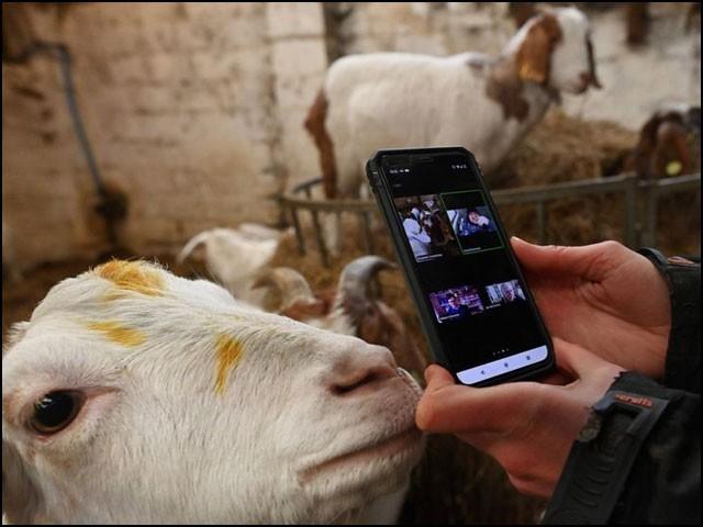 اس کتاب میں بکری کے ساتھ کانفرنس کال کی سہولت بھی مہیا کی گئی ہے۔  (فوٹو: اے ایف پی)