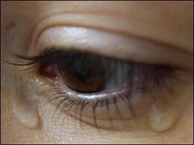 تجربہ گاہ کے ماحول میں ان غدود نے ٹھیک ویسے ہی آنسو بہائے جیسے قدرتی آنکھ سے آنسو نکلتے ہیں۔ (فوٹو: وکی پیڈیا)