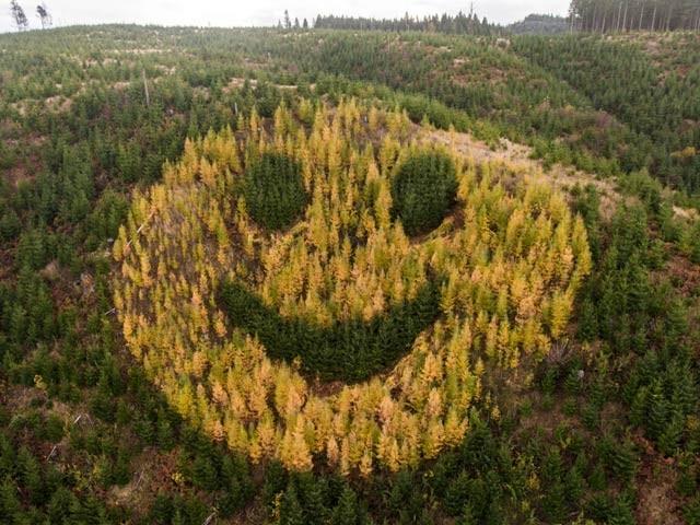 اوریگون کی ہائی وے 18 س دکھائی دینے والا یہ چہرہ درختوں سے بنایا گیا ہے۔ فوٹو: اوڈٹی سینٹرل