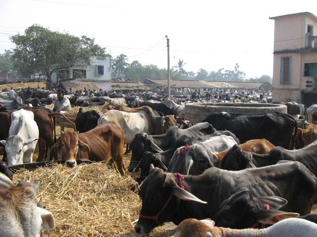 جانور، خصوصا ممالیہ جنگلی جانور انسانوں میں پیدا ہونے والے 70 فیصد سے  سے زائد انفیکشنز کا ذریعہ ہیں