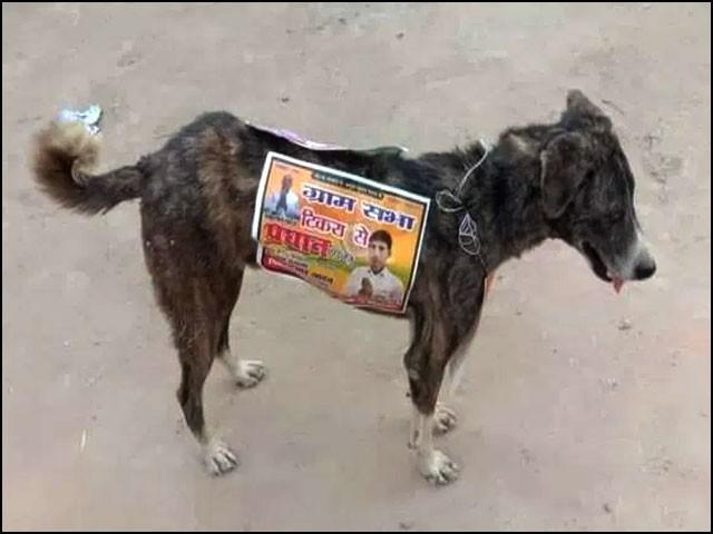 اپنی انتخابی مہم کامیاب بنانے کےلیے بھارتی سیاستدانوں نے ہر طرح کی اخلاقی ذمہ داری کو بالائے طاق رکھ دیا۔ (فوٹو: سوشل میڈیا)