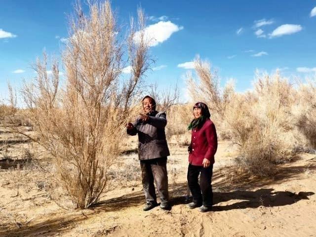تصویر میں ٹوبوباٹو اور ان کی اہلیہ ریگستان میں شجرکاری کررہے ہیں اور یہ کام گزشتہ 20 برس سے جاری ہے۔ فوٹو: اوڈٹی سینٹرل