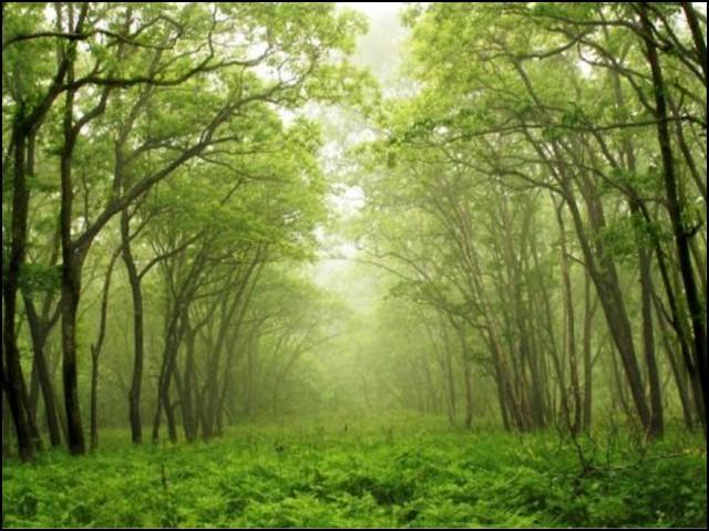 جنگلات کو اگر ماحول کا نگہبان کہیں تو غلط نہ ہوگا۔ (فوٹو: فائل)