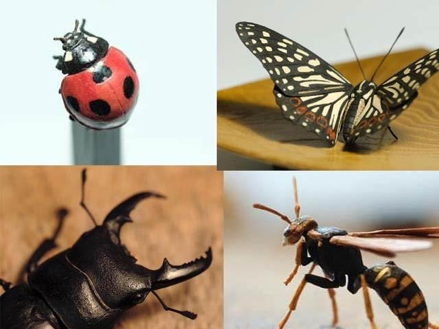 جاپانی فنکار ٹورو فوکوڈا نے نئی تکنیک سے حشرات کے سہ جہتی ماڈل بنائے ہیں جنہیں دیکھ کر حیرت ہوتی ہے۔ فوٹو: فائل