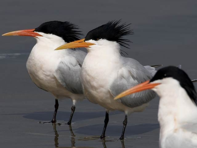 بولسا چیکا میں 12 مئی کو گرنے والے ڈرون کے بعد ہزاروں پرندے خوفزدہ ہوکر یہ علاقہ چھوڑ چکے ہیں۔ فوٹو: بولسا چیکا پارک ویب سائٹ