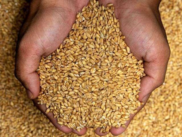 گندم اور چوکر پر سیلز ٹیکس کی تجویز واپس لینے سے یکم جولائی سے آٹے کی قیمتوں میں متوقع اضافہ رک جائے گا، ذرائع۔ فوٹو:فائل