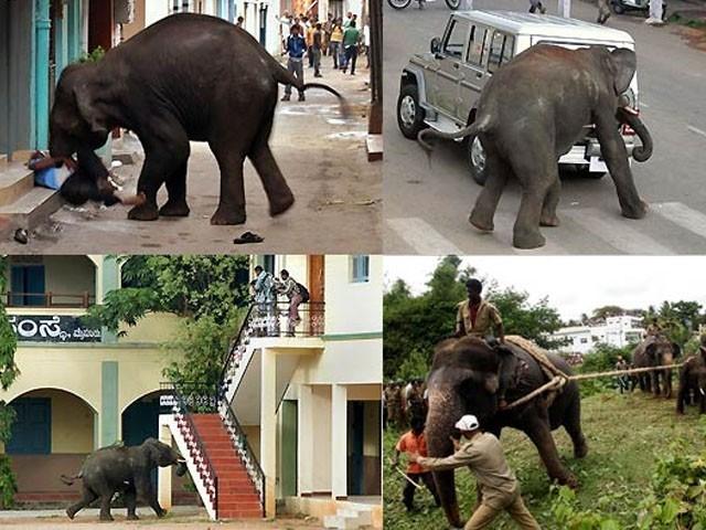 ہاتھی کی نگرانی کا عمل جاری ہے، محکمہ جنگلات (فوٹو: فائل)