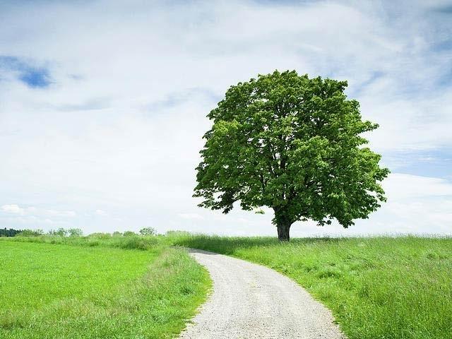 گنجان شہروں میں صرف ایک درخت بھی پورا خردماحولیاتی نظام بناتا ہے۔ فوٹو: فائل