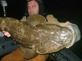 تصویر میں دکھائی دینے والی فلیٹ ہیڈ مچھلی دو سال میں چار مرتبہ پکڑی گئی ہے۔ فوٹو: اے بی سی