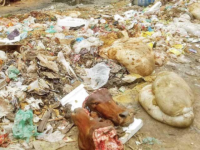 لیاری آگرہ تاج کالونی کی سڑک پر آلائشیں اور جانوروں کی باقیات پڑی ہیں۔  فوٹو : ایکسپریس