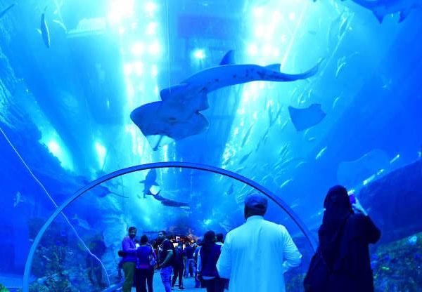 Dubai Swimming pool 3