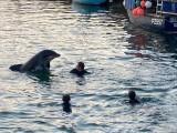 ویڈیو سے لیا گیا ایک منظر جس میں نِک نامی ڈولفن انسانوں کے بالکل قریب دیکھی جاسکتی ہے۔ فوٹو: بشکریہ ڈیلی میل