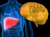 الزائیمرز بیماری کی وجہ بننے والے خطرناک پروٹین 'ایمیلائیڈز' جگر میں بن کر دماغ تک پہنچتے ہیں۔ (فوٹو: انٹرنیٹ)