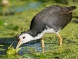 محکمہ جنگلی حیات ہر سال مختلف جنگلی جانوروں و پرندوں کے قانونی شکارکی اجازت دیتاہے  فوٹو: فائل