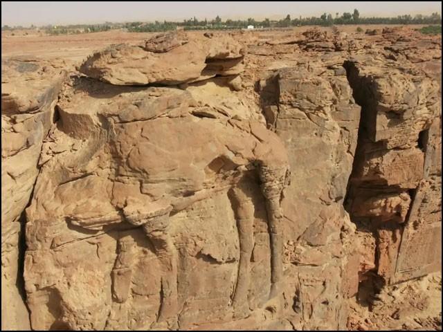 شمالی سعودی عرب کے پہاڑوں میں تراشے گئے اونٹوں کے ان مجسموں کی تعداد تقریباً درجن بھر ہے۔ (تصاویر: متفرق ویب سائٹس)