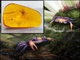 اس کیکڑے کو 'کریٹاپسیرا ایتھاناٹا' کا سائنسی نام دیا گیا ہے جس کا مطلب 'عہدِ چاکی (کریٹے شیئس) کے بادلوں اور پانیوں کی روح' ہے۔ (فوٹو: سائنس ایڈوانسز)
